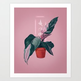 flower with hieroglyphs. plant and calligraphy. indoor plant. Philodendron Pink Princess Art Print