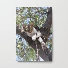 Bi-Color Tabby Cat In Tree 3 Metal Print