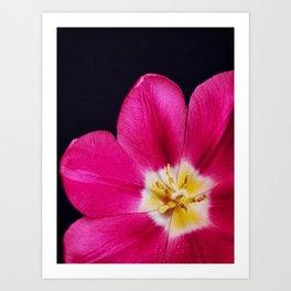 Spring Time Tulip Art Print