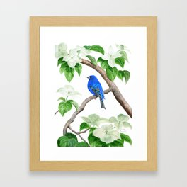 Royal Blue-Indigo Bunting in the Dogwoods by Teresa Thompson Framed Art Print