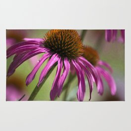 Late Summer Coneflower Rug