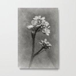 Timeless flowers #7 Metal Print