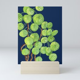 Chinese Money Tree on Navy Ground Mini Art Print