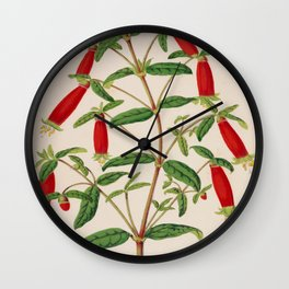 Correa Cordinalis Vintage Botanical Floral Flower Plant Scientific Illustration Wall Clock