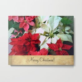 Mixed color Poinsettias 1 Merry Christmas S2F1 Metal Print