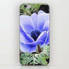 Purple Poppy Anemone I iPhone & iPod Skin