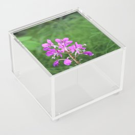 Fireweed Wildflower Acrylic Box