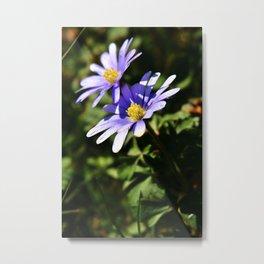 Anemone Blanda Purple Flowers | Botanical | Nature Photography Metal Print