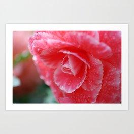 Pink Rainy Garden Rose from Butchart Gardens Art Print