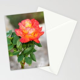 Multicolored Rose Stationery Cards