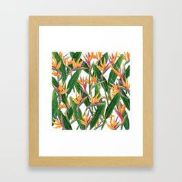 bird of paradise pattern Framed Art Print