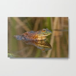 Bullfrog Reflections at Sunset by Reay of Light Photography Metal Print