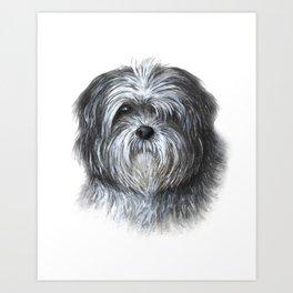 Dog 138 Shih Tzu Art Print