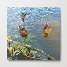 Ducks in Lake Metal Print