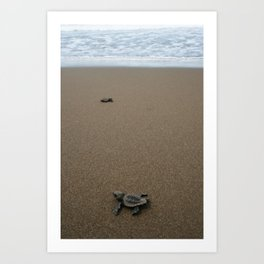 baby sea turtle journey Art Print