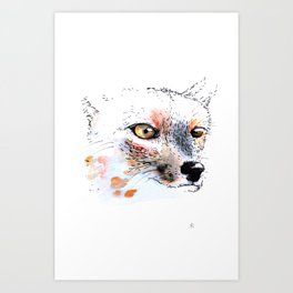 Cumpeo Fox Art Print