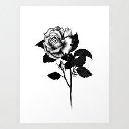 Rose and Bud Art Print