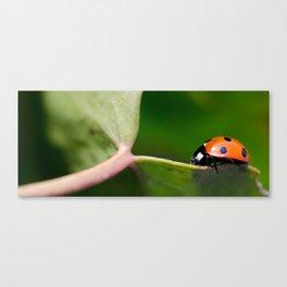 Ladybug walking on leaf Canvas Print