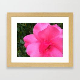 Pink Rose 2 Framed Art Print