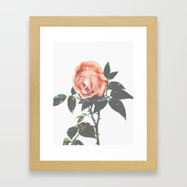Thorned Rose Framed Art Print