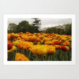 Tulip 3 Art Print