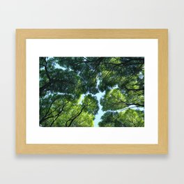 Crack willow Framed Art Print