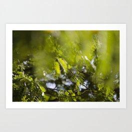 Through the Leaves Art Print