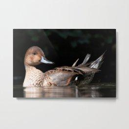Duck 2020 Metal Print