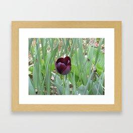 Burgundy Tulip Framed Art Print