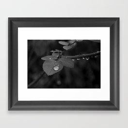 Tear Drop Black & White  Framed Art Print