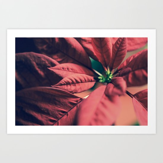 Poinsettia Red Art Print
