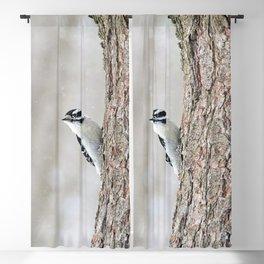 Wintertime Downy Woodpecker Blackout Curtain