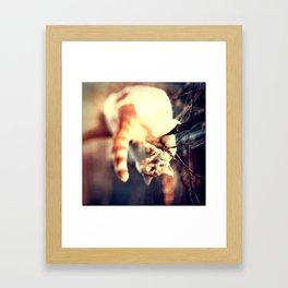 Lomo Cat Framed Art Print