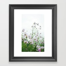Mexican Aster 1 Framed Art Print