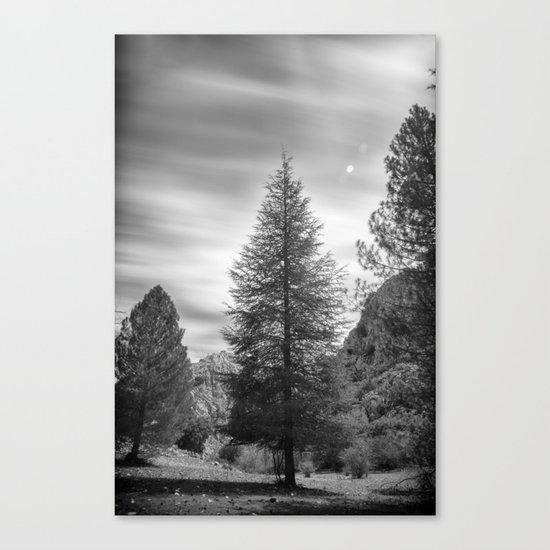 """Looking for the sky"" Into the woods... BW Canvas Print"