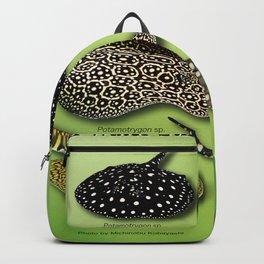 Amazon freshwater stingray Backpack