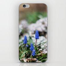 Grape Hyacinth III iPhone & iPod Skin
