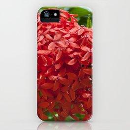 Ixora Coccinea iPhone Case