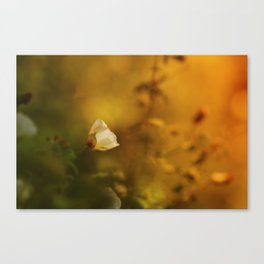 White flowers in the morning light Canvas Print