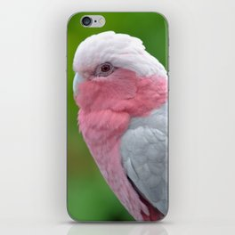 Beautiful Rose Breasted Cockatoo iPhone Skin