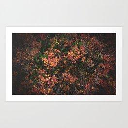 Alaskan Autumn Art Print