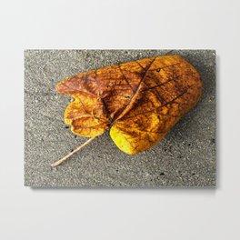 Autumn leave Metal Print