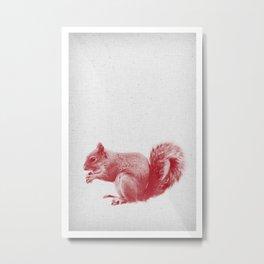 Squirrel 01 Metal Print