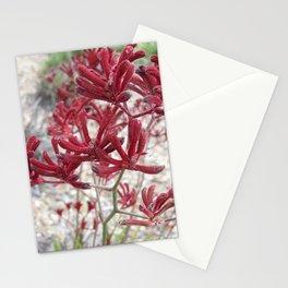 Red Kangaroo Paw Stationery Cards