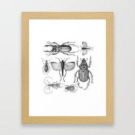 Vintage Beetle black and white drawing Framed Art Print
