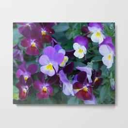 Beloved violas Metal Print
