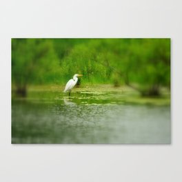 Marsh Egret Canvas Print