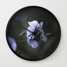 Justicia gendarussa L f Wall Clock