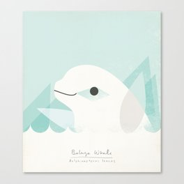 Buluga Whale Canvas Print