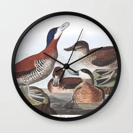 Ruddy duck, Birds of America, Audubon Plate 343 Wall Clock